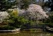 Chinese Garden, R...
