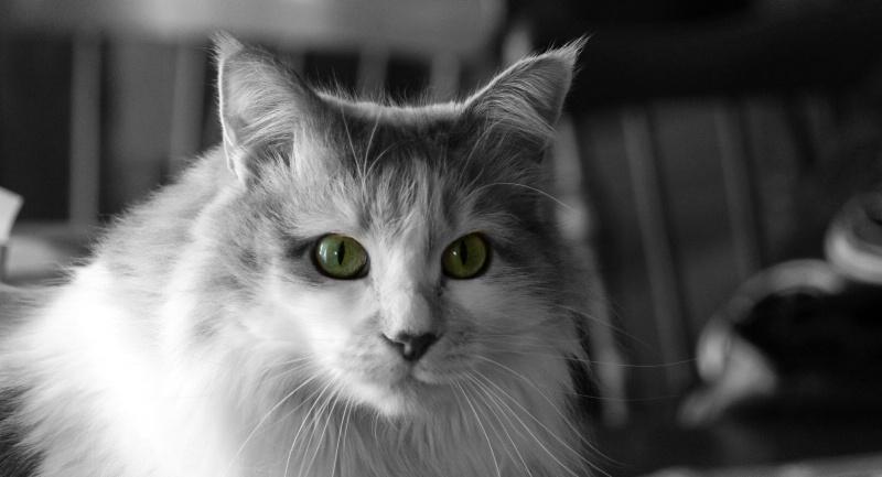 Calli Cat - ID: 13858626 © Sheryl K. Larson