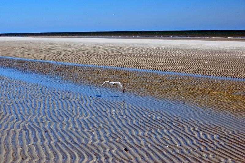 Sand Ripples - ID: 13859222 © Zelia F. Frick