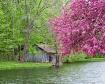 Beauty in Spring
