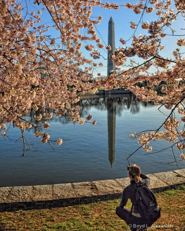 Trying for the perfect cherry blossom image.