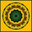 Sunflower Kaleido...