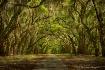 Peaceful Arbor