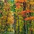 2Strolling Along An Autumn Trail - ID: 13932142 © Zelia F. Frick