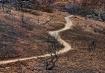 path-thru-char-wo...