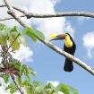Toucan Territory