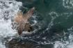 Peregrine Wings S...