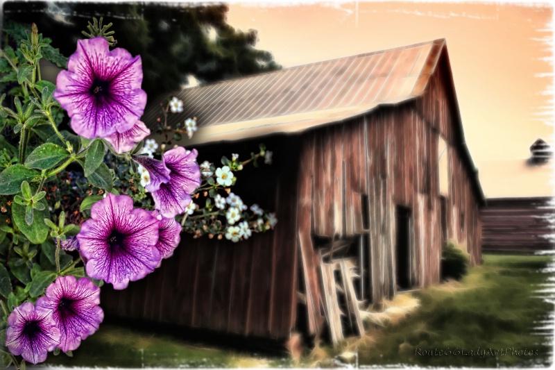 Funk's Grove - ID: 13953885 © JudyAnn Rector
