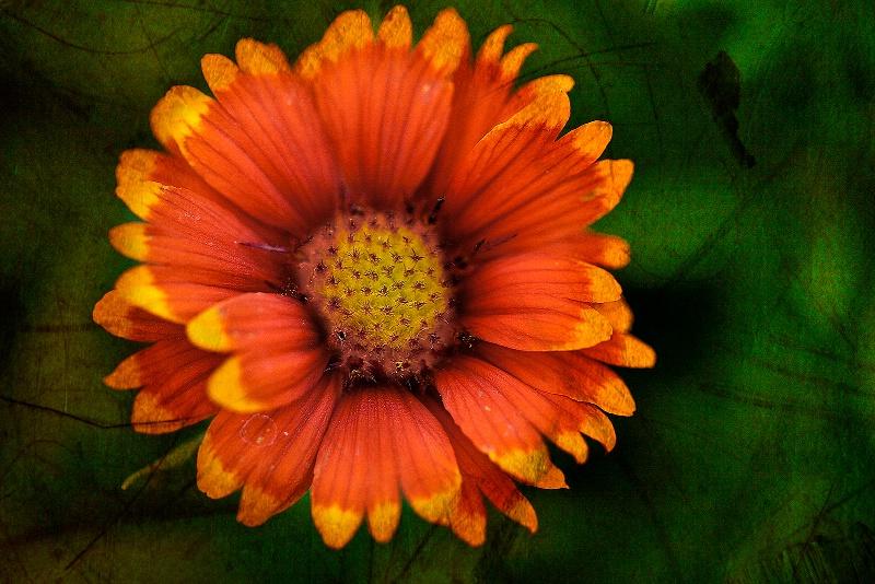 Color Contrast Painted Flower