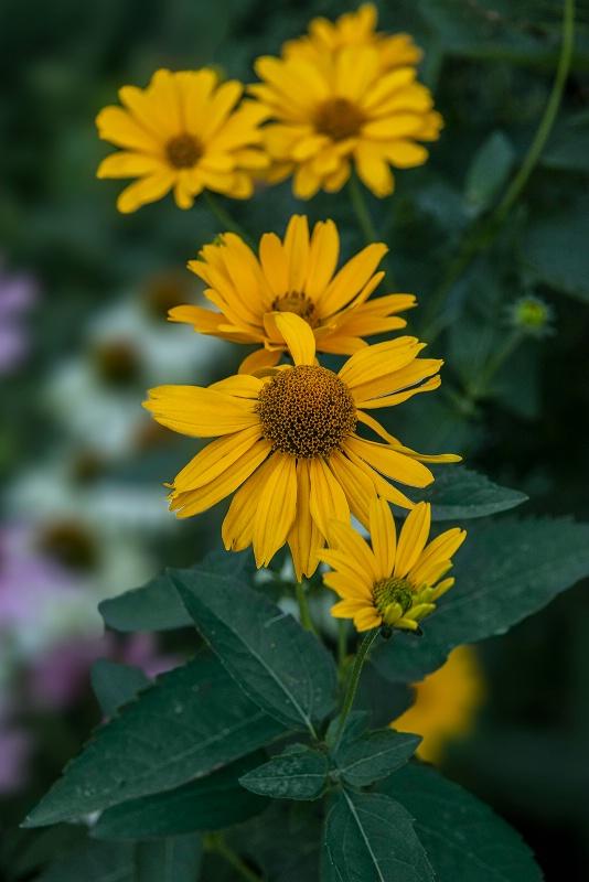 Flower in Selective Focus