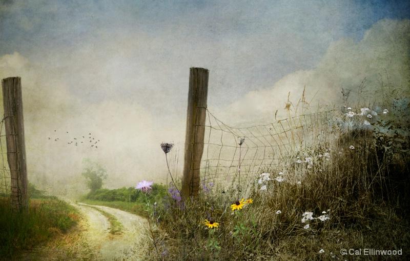 Through The Meadow's Gate