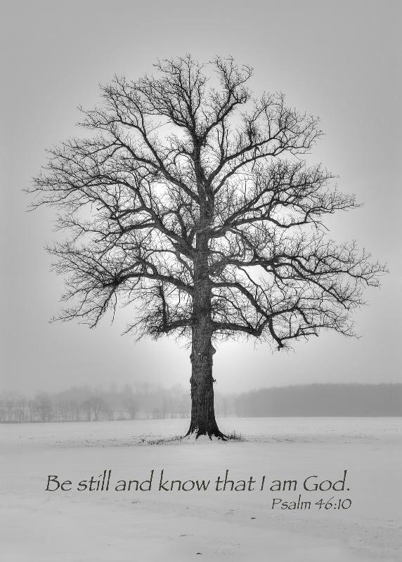 Allegan Winter Tree / Psalm 46:10 - ID: 13978514 © Leland N. Saunders
