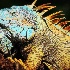 © Karen E. Michaels PhotoID # 13984011: Iguana