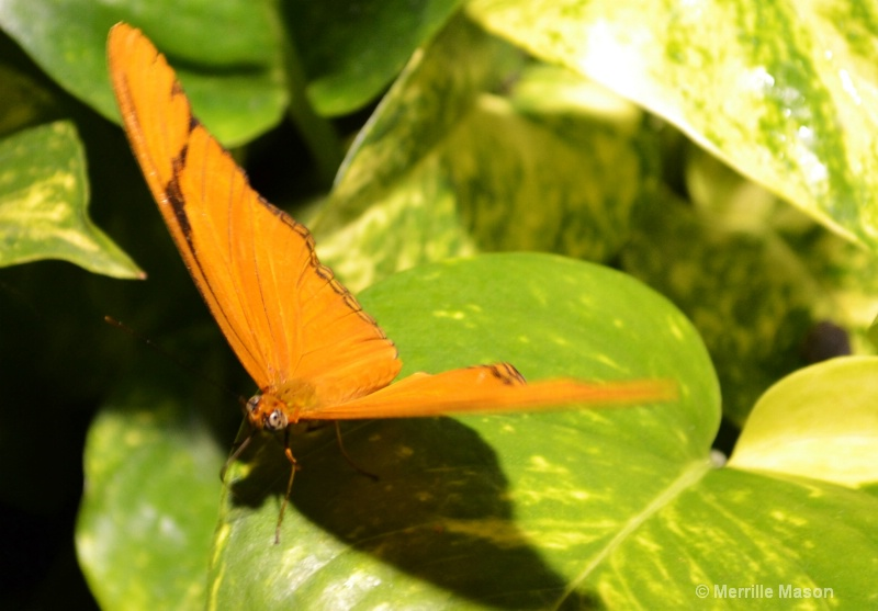 orange - ID: 13993240 © Merrille Mason