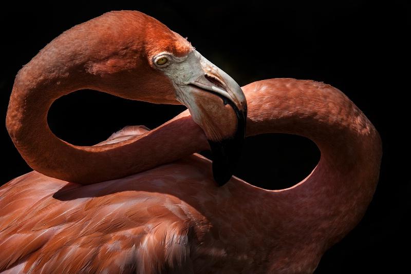 Graceful Flamingo