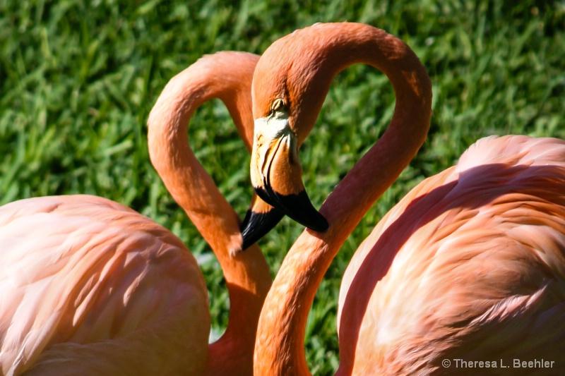 True Love Ways - ID: 14005984 © Theresa Beehler