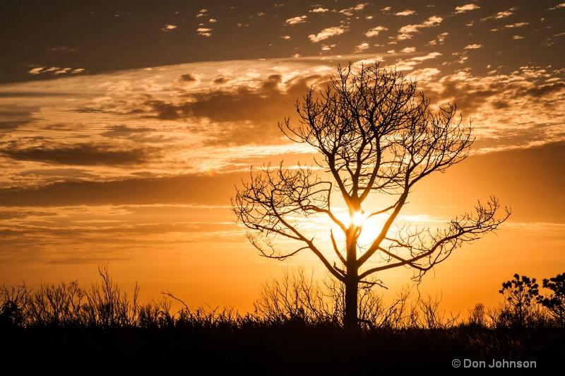 Sunrise Tree - ID: 14036731 © Don Johnson