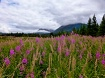 Alaska in August