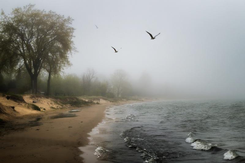 Misty - ID: 14052338 © Karen Celella
