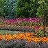 © Carol Flisak PhotoID # 14056753: Oregon Gardens