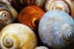 Nantucket Shells
