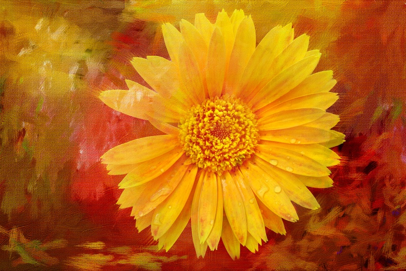 Painting of a Yellow Daisy