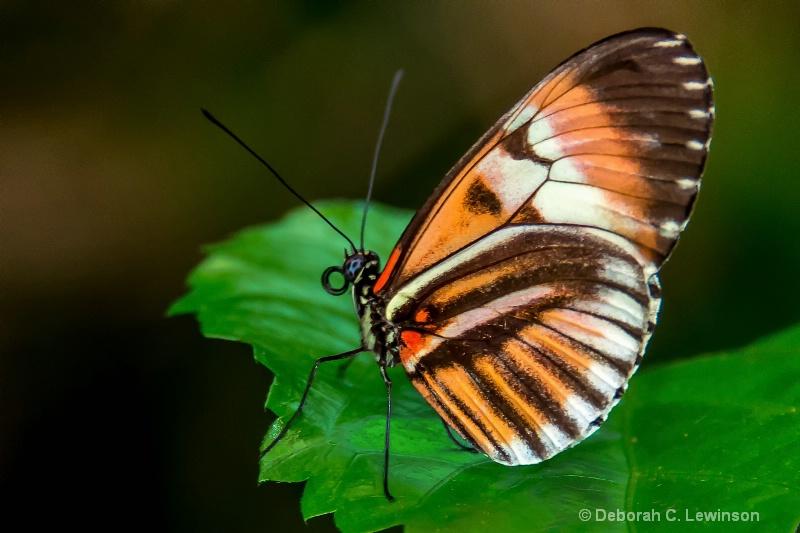 Brown Beauty - ID: 14117290 © Deborah C. Lewinson