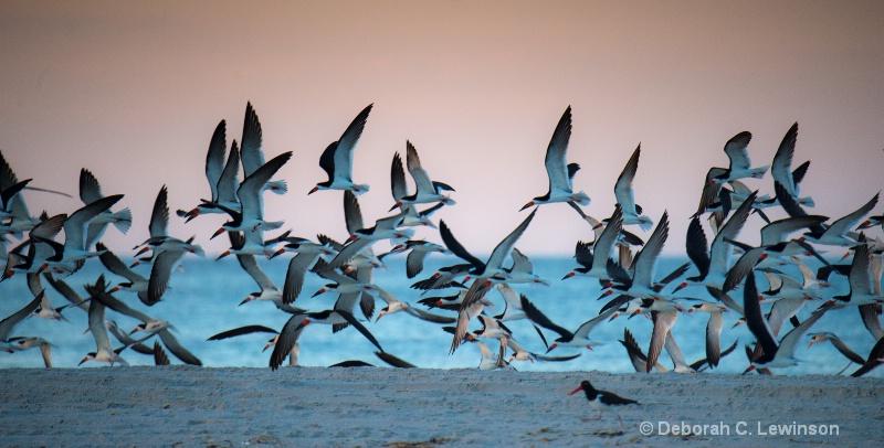 Dawn Flight - ID: 14154299 © Deborah C. Lewinson