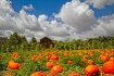 Pumpkin Patch Clo...