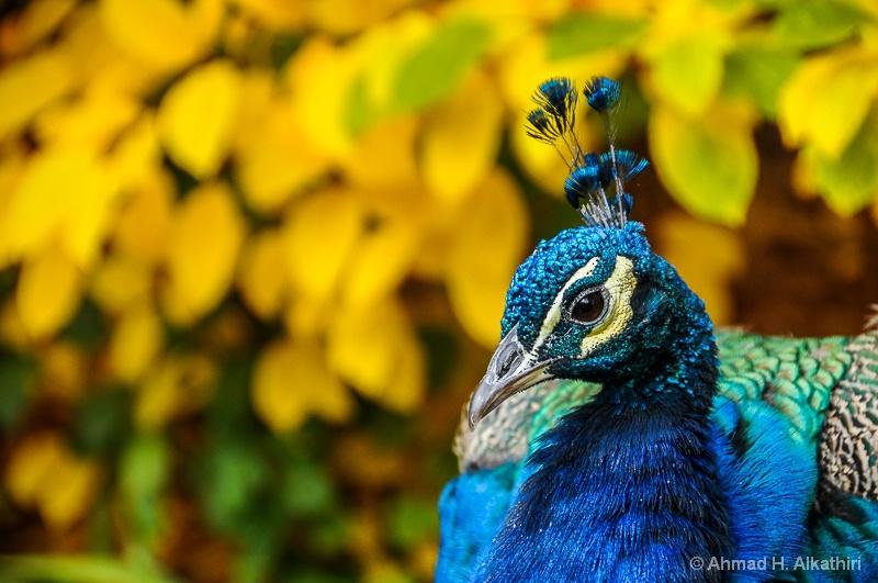 Colorado, USA - ID: 14189207 © Ahmad Alkathiri