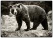 The Mighty Bear