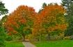 Arnold Arboretum.
