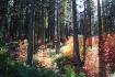 Dogwood Garden