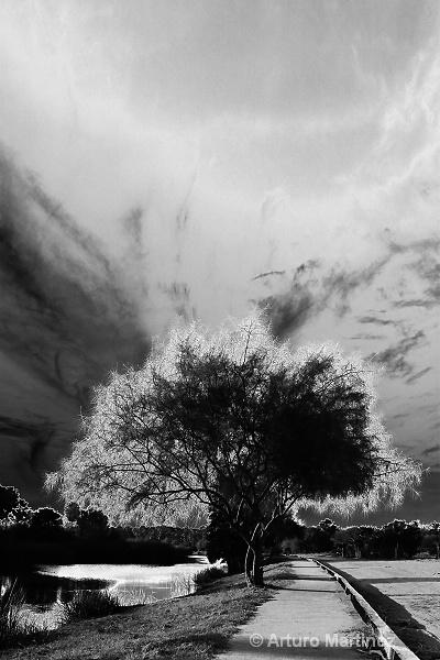 - ID: 14224237 © Arturo Martinez