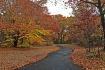 A Peaceful Path.