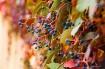 treats of autumn