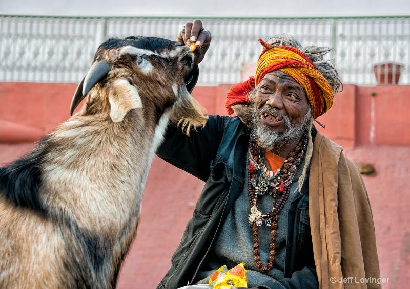 Feeding the Goats, Varanassi, India     - ID: 14271276 © Jeff Lovinger