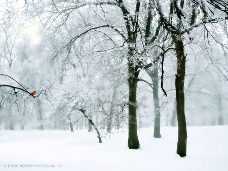Winter Whispers