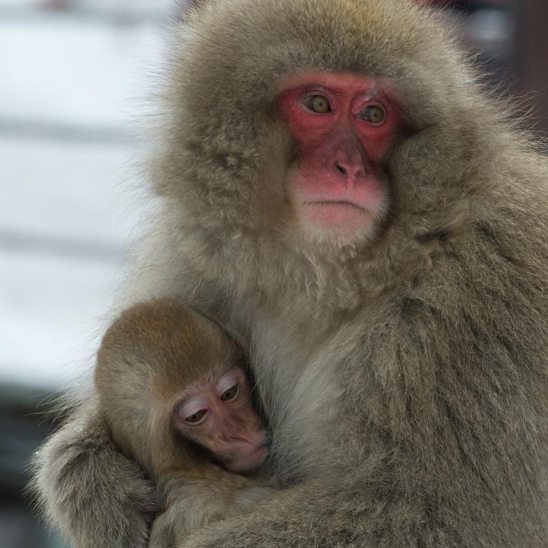 Mom Hugging Baby - ID: 14331843 © Kitty R. Kono