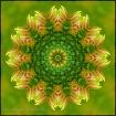 Sunflower Transfo...