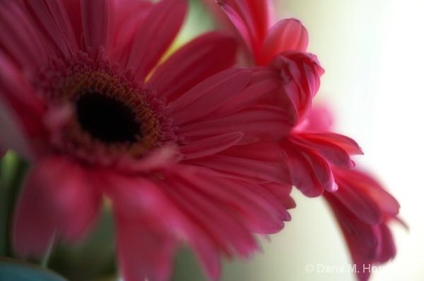 Pretty in Pink - ID: 14340061 © Dana M. Scott