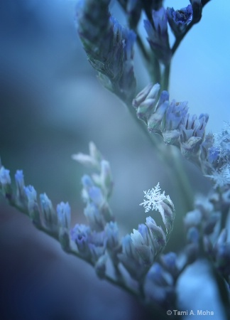 Photography Contest Grand Prize Winner - January 2014: Snow Flake