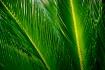 Nature's Deta...