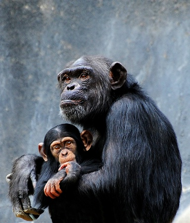 Photography Contest Grand Prize Winner - March 2014: Family Portrait