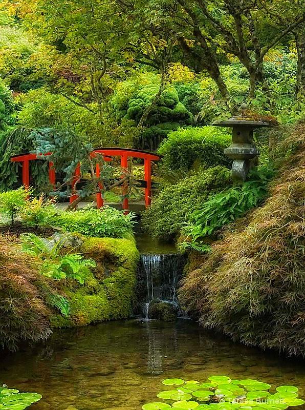 Butchart Gardens - ID: 14420128 © Teresa Burnett
