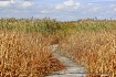 october marsh wal...