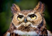 Owl Eyed