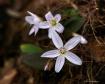 Spring Wild Flowe...