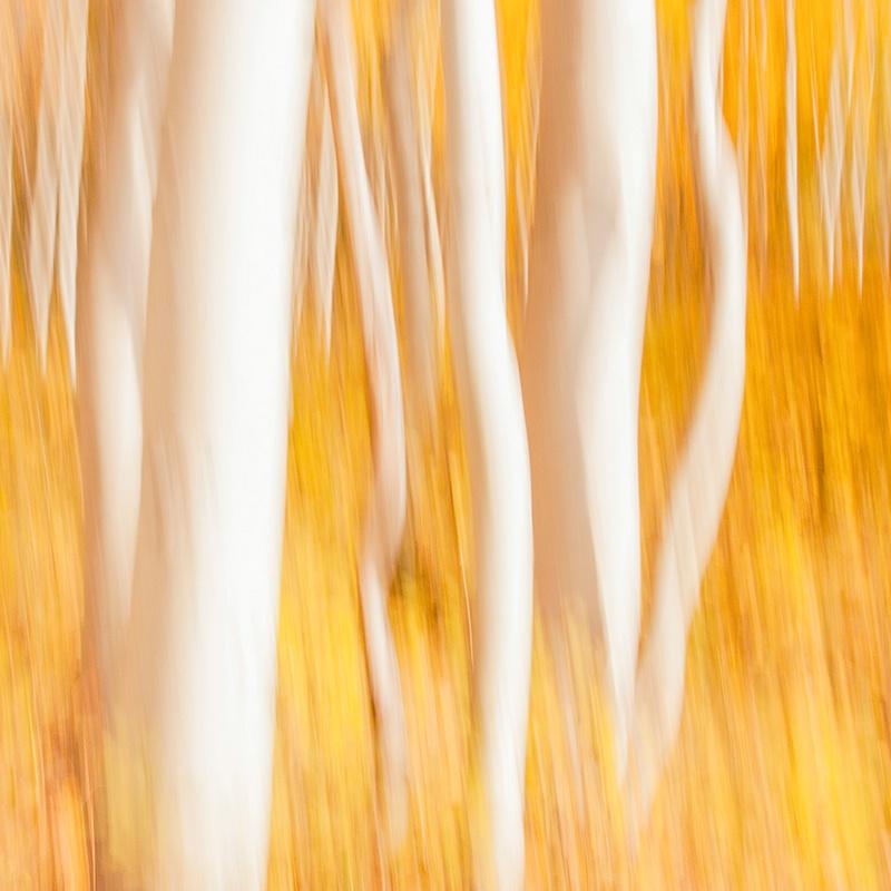 Aspen Abstract II