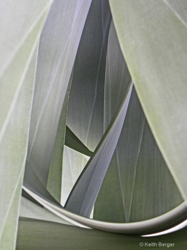 Agave #11 - ID: 14460906 © J. Keith Berger
